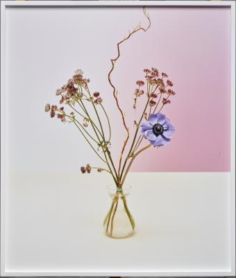 Annette Kelm, Bouquet, 2012, C-print; edition of 5, Dallas Museum of Art, Lay Family Acquisition Fund, 2016.16.5.
